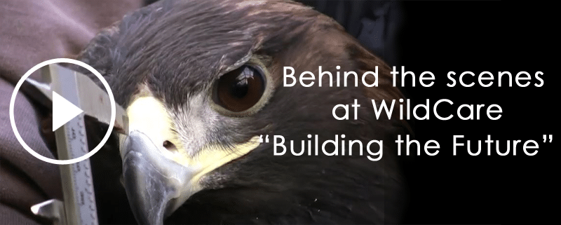 behind-the-scenes-at-wildcare
