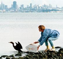 Releasing a cormorant