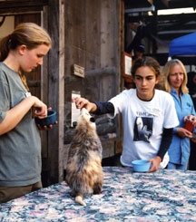 Teen volunteers working with a Wildlife Ambassador opossum.