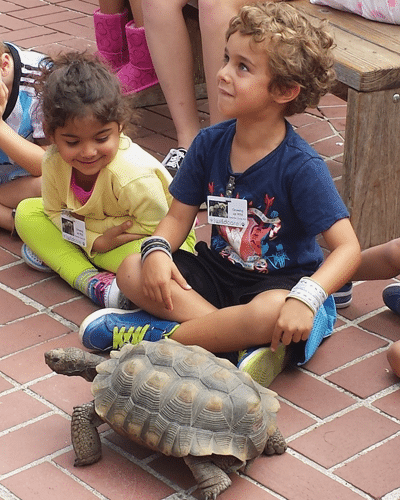 Meeting the tortoise. Photo by Tory Russell