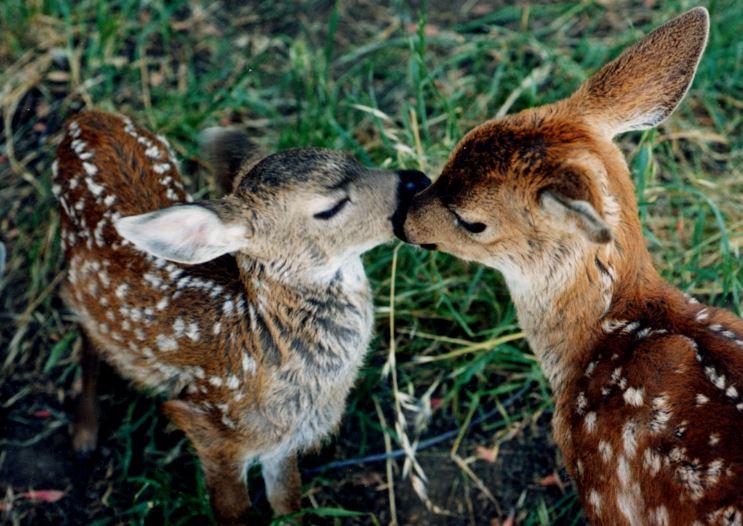 Sponsor Baby Animals – WildCare
