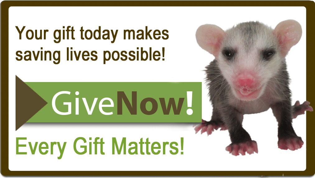 opossum-give-now-button
