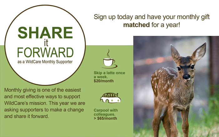 share-it-forward-fawn