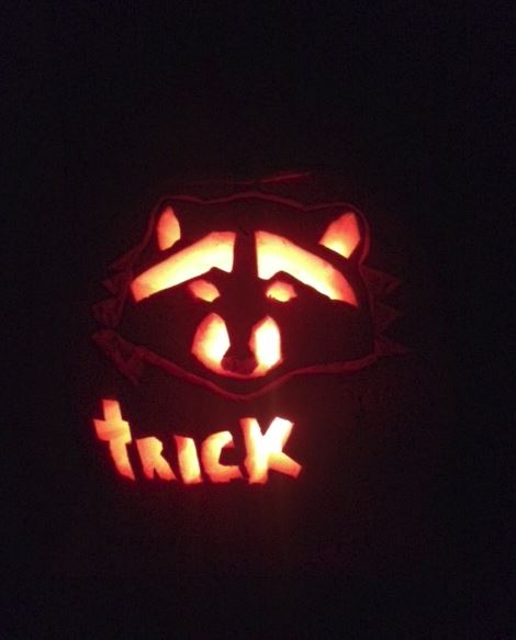 Pumpkin carved as a raccoon. Photo by Marie-Noelle Marquis