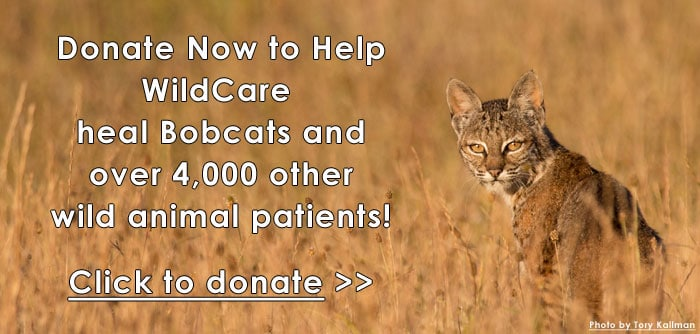 donate-now-photo-by-tory-kallman